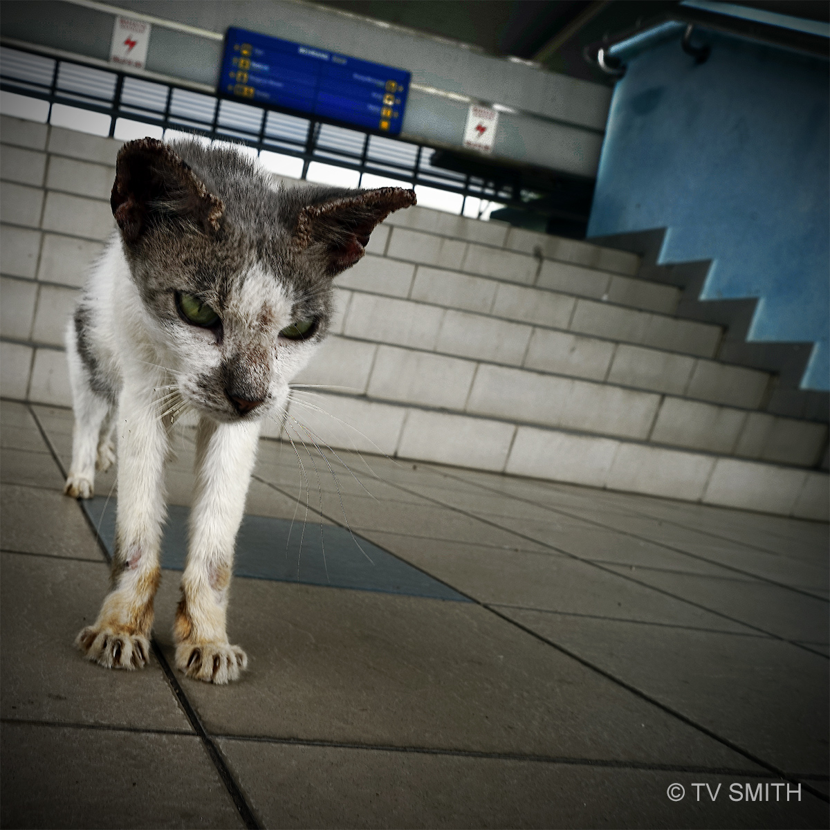 The Lonely Cat At Behrang Station