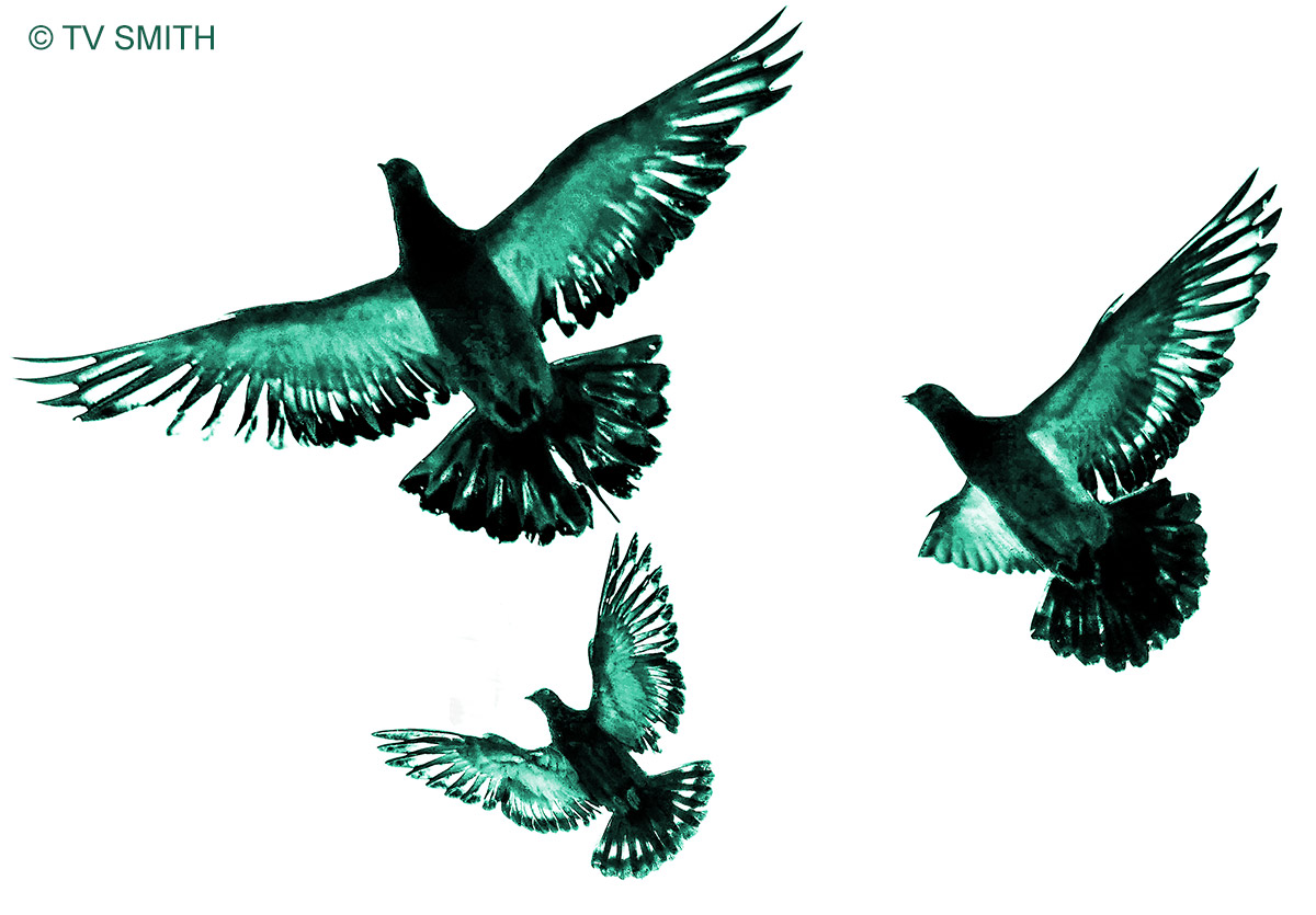Dance Of The Doves
