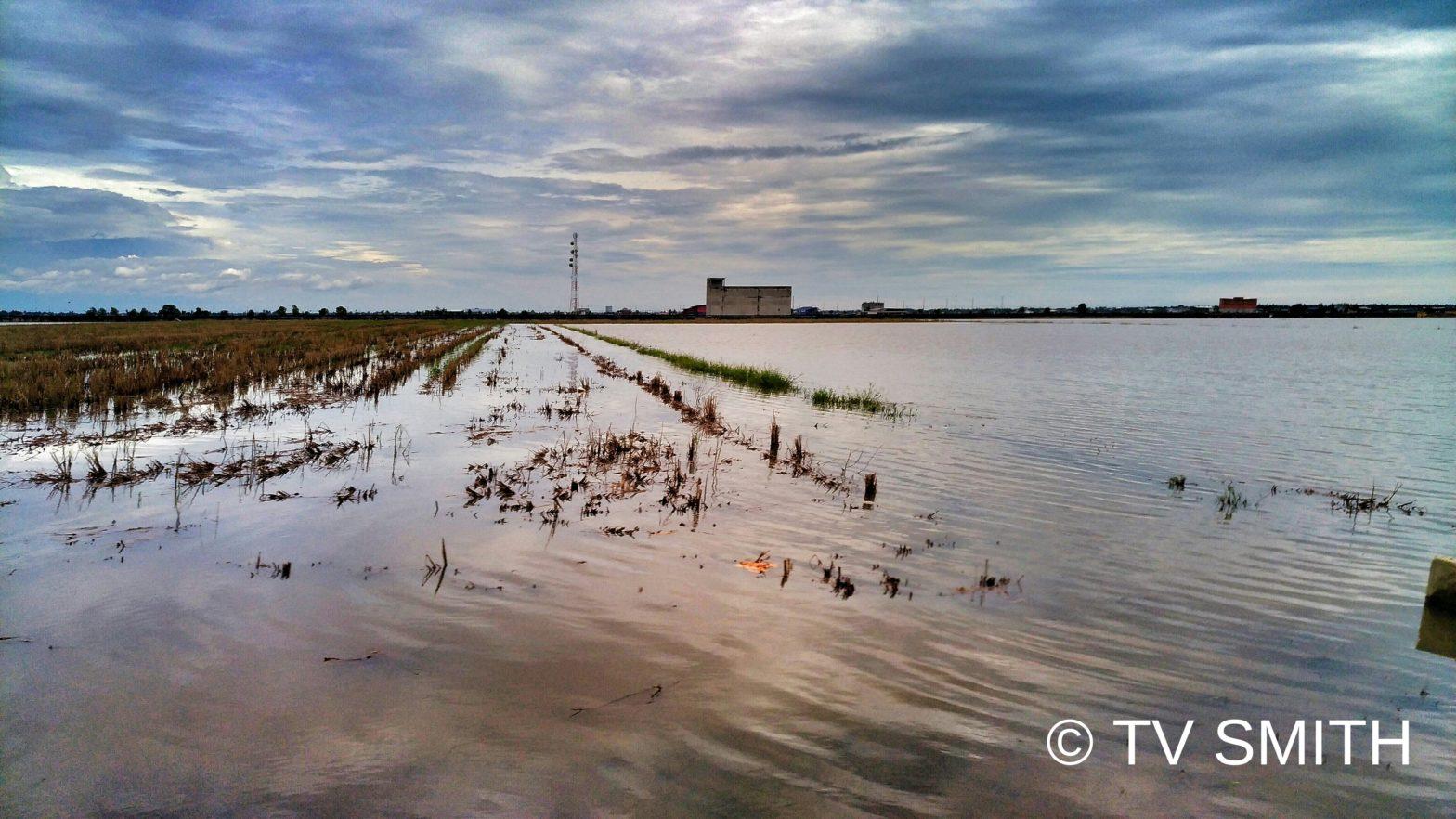 Flooded Sekinchan