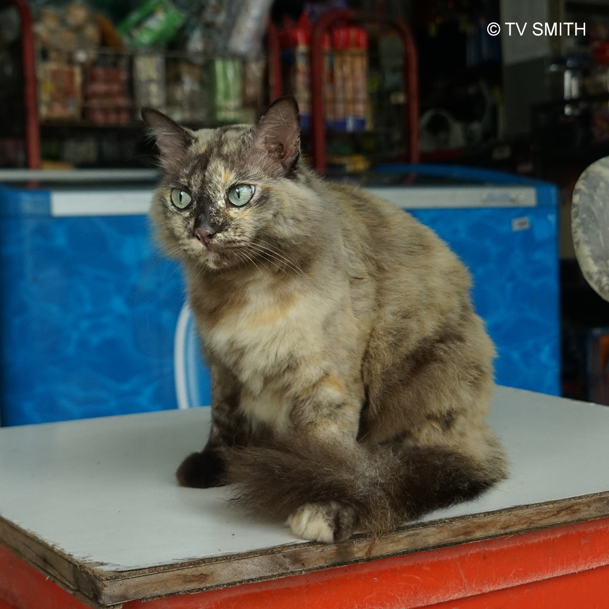 Fat Cat Of The Village Grocer at the Leper Colony