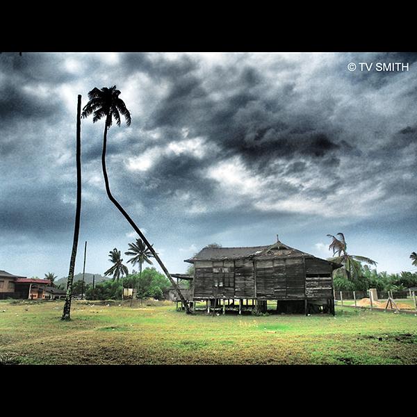 More Terengganu Pics – Trees
