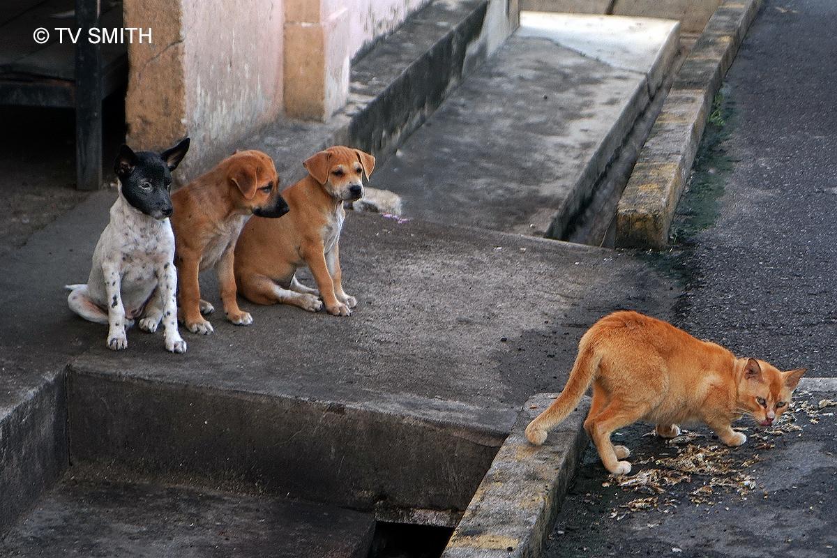 Three Little Dogs.